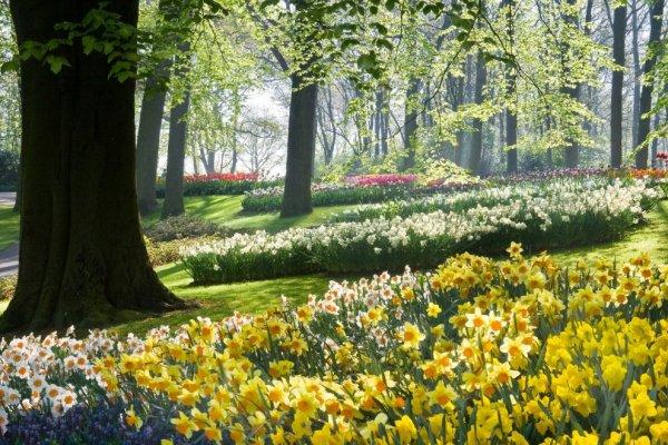 Коли в Україну прийде справжня весна і якою вона буде: прогнози синоптиків
