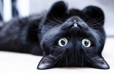 Чорна кішка: забобони та міфи