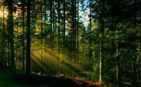 У Берегові відбудеться свято лісу для дітей та лісівників